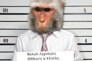 Makak Malpa w tekst