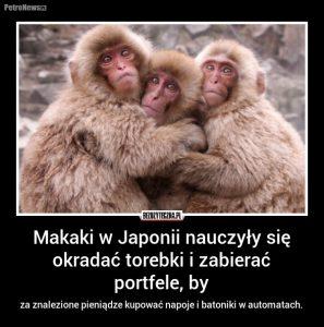 Fot: bezuzyteczna.pl