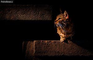 W końcu było i świetne światło, i kot w odpowiednim miejscu oraz czasie...