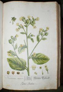 e-blackwell-herbarium-ryc-1