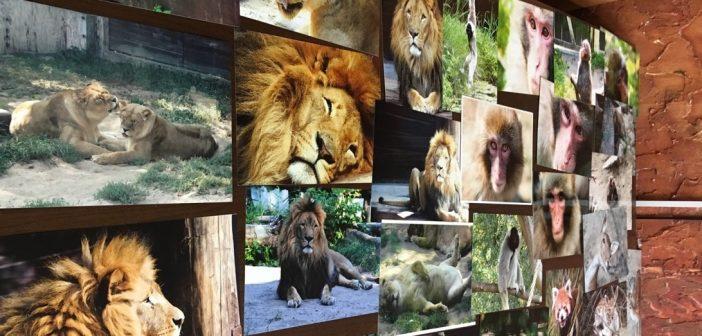 Mam cię na oku! Konkurs zoo rozstrzygnięty – wygrała…