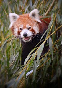 Panda, fot. Ewa Ablewska